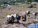 Monte Calvo_13